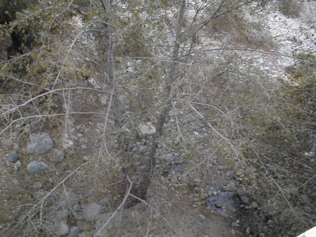 A shot of some trees in Eaton Canyon from the bridge at the bottom of the Toll Road. This was shot over the south side of the bridge. The bridge is at the far north end of the box canyon. North of the bridge is a trail that leads to the waterfall.